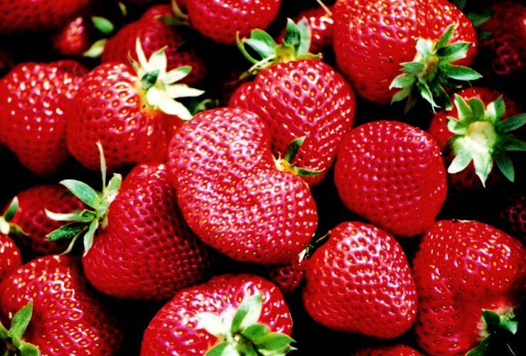 Erdbeeren 8.jpg